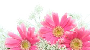 未来の花束 ガーベラ